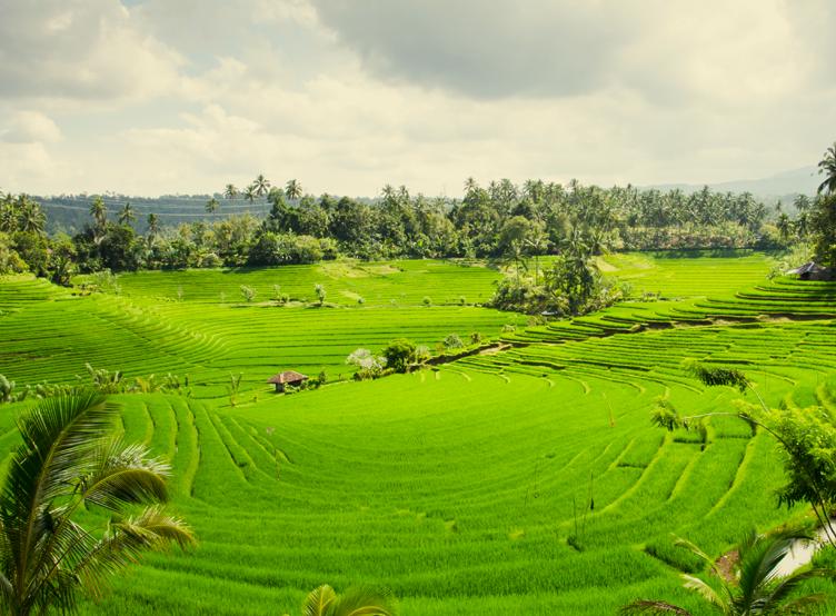 conseils pour un voyage à Bali